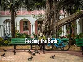 Feeding the Birds in Nassau, Bahamas