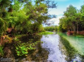 Wekiwa Springs State Park in Florida